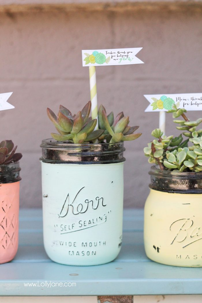 Diy mason jar succulent pots with free printable gift tags diy mason jar succulent pots with free printable gift tags perfect for mothers day or negle Gallery