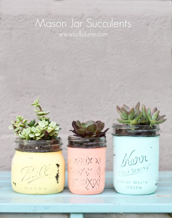 DIY Mason Jar Succulents. Holy CUTE and super easy to make (and cheap!) via @lollyjaneblog