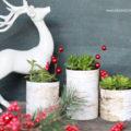 Simple Christmas decor, birch wood succulent planters  via lollyjane.com