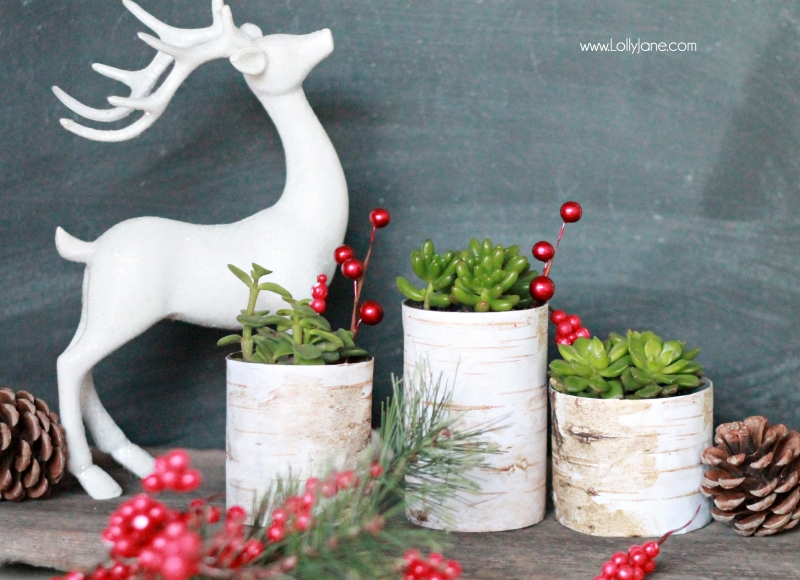 Simple Christmas decor, birch wood succulent planters |via lollyjane.com