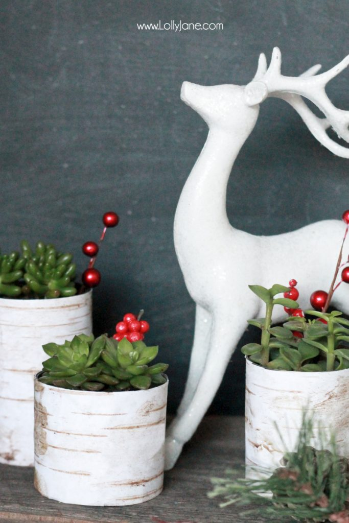 Simple Christmas decor, birch wood succulent planters |via lollyjane.com