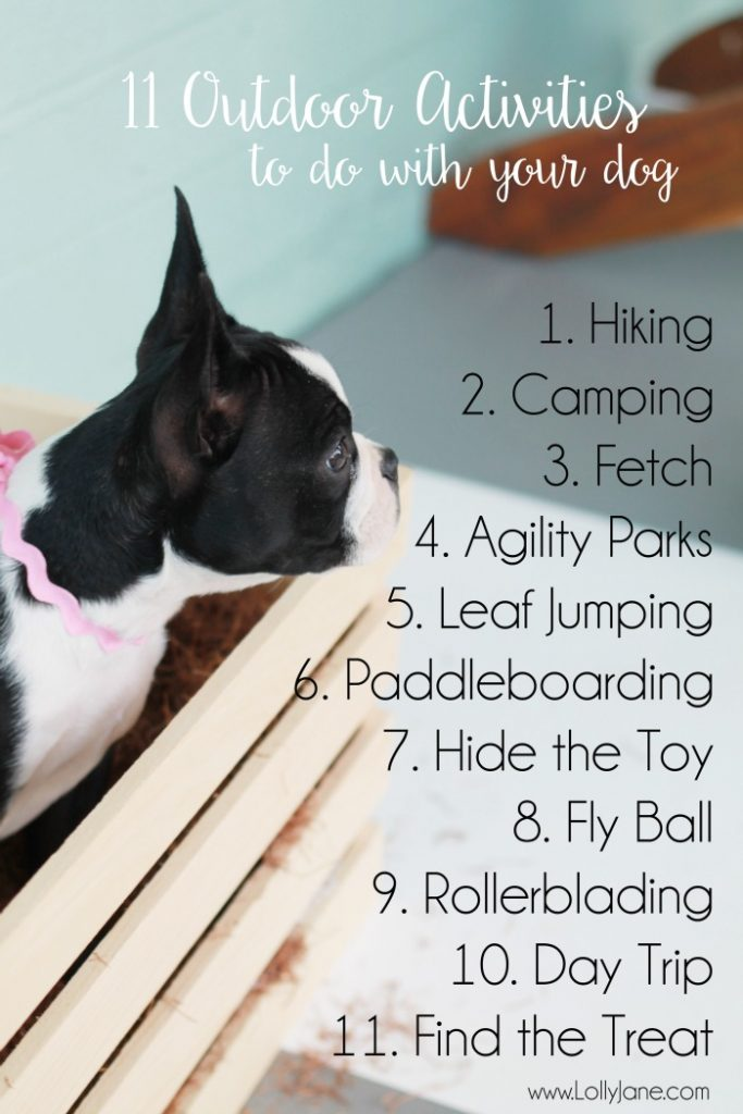 11 outdoor activities to do with your dog! Great ideas to keep your pooch entertained all fall long, fun winter dog activity ideas!