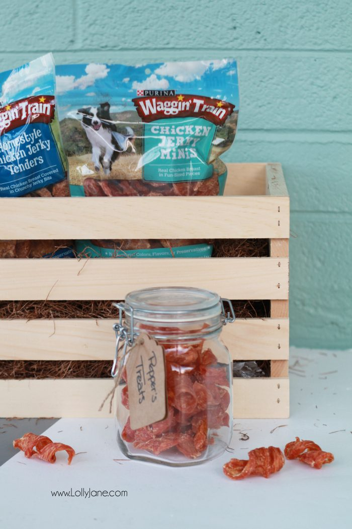 Attractive dog snack storage: pretty jar filled with your best friend's treats!