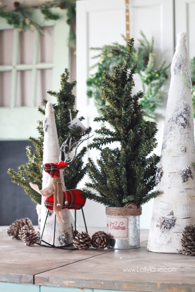 Space Between Two Spruce Trees Decor