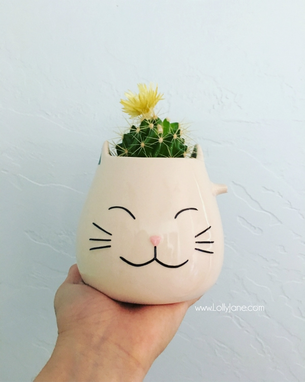 Upcycled broken cat mug turned succulent container. Love this quick DIY succulent pot!