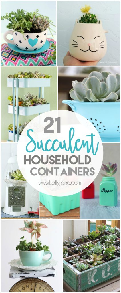 21 Household Succulent Containers Lolly Jane
