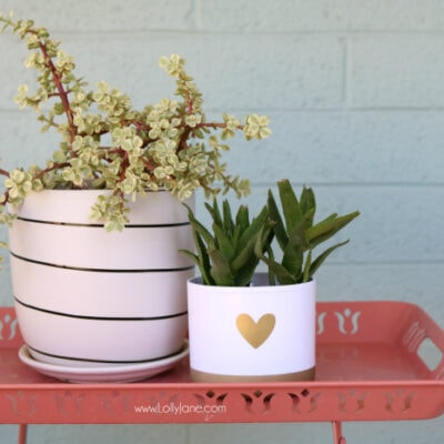 toothbrush holder succulent container