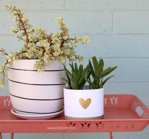 DIY toothbrush holder succulent! Turn a toothbrush holder into a succulent planter, so cute! Love this succulent hack!