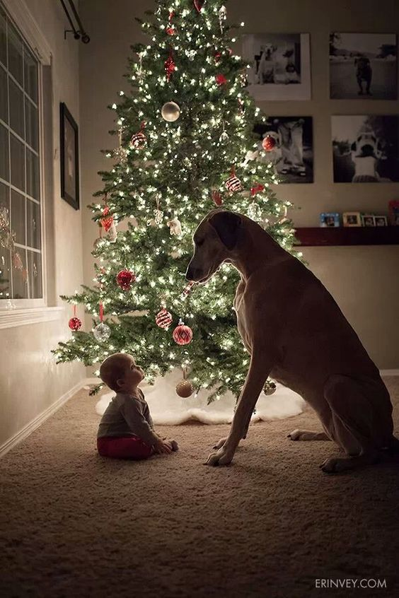 baby-dog-christmas-tree
