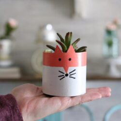 cereal box succulent planters