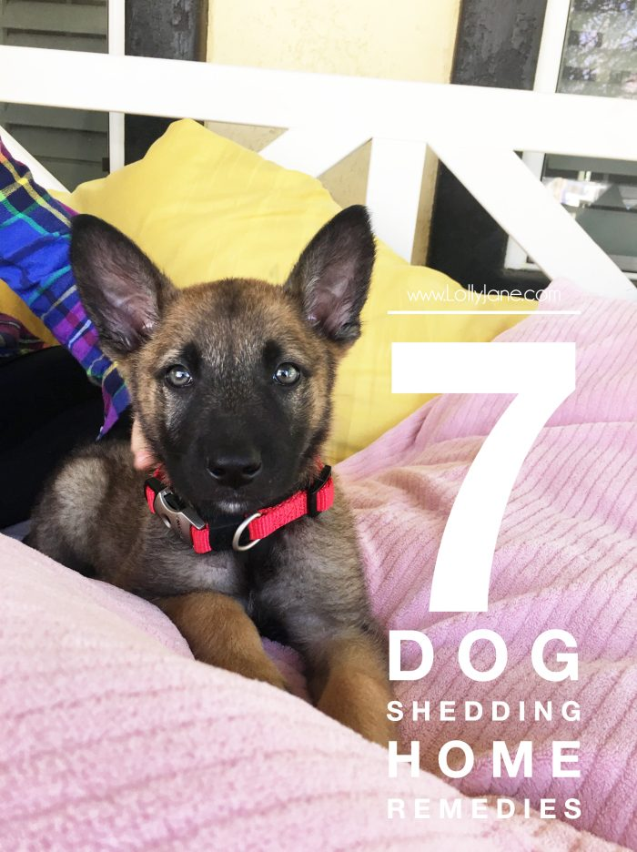 7 dog shedding home remedies - We love our Swiffer Vac! It picks up dirt and debris but also catches remaining allergens, pet hair and dander with its Swiffer Pad. Brilliant! Great tricks to keep pet hair shedding at bay! Lots of dog shedding home remedies.