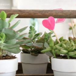 Valentine's Day succulent centerpiece