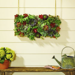 Vertical Succulent Garden workshop: Save the date!