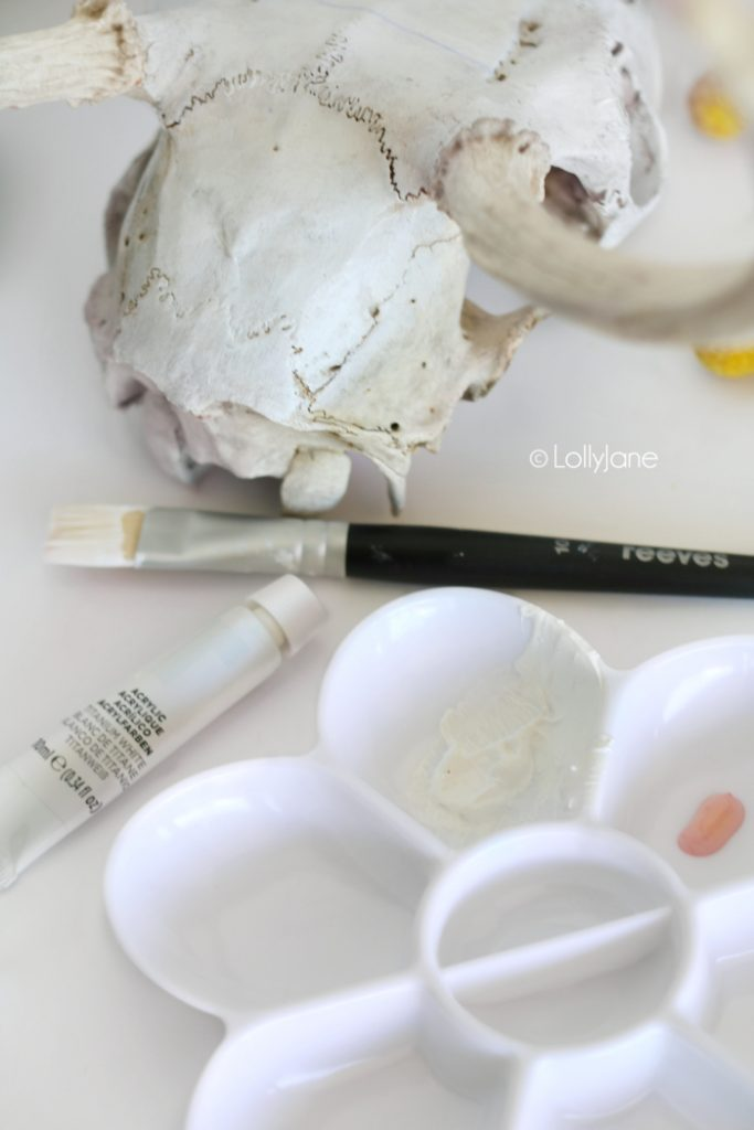 Pretty two-tone skull, brighten it up with a whitewashed acrylic paint in no time at all!