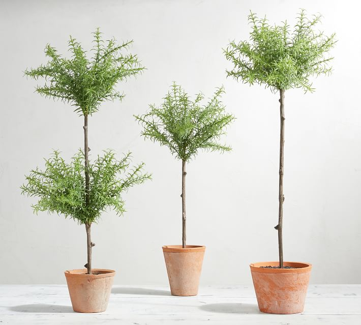 Adore this faux topiary trees from PB! They're the perfect decor accessory for any room in the house!