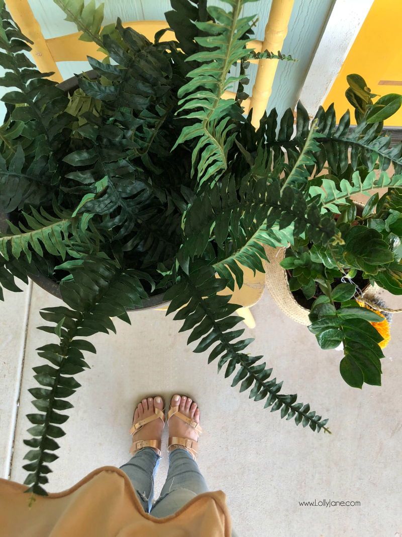 Lots of info on fern decorating ideas for your porch decor! We love how full ferns are and how easy they grow. Artificial ferns are even easier to work with, we love this colorful porch decor!