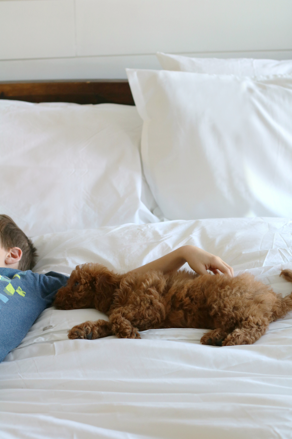 High quality bedding that is cozy and stylish... kid and pet friendly! #gryphonhome