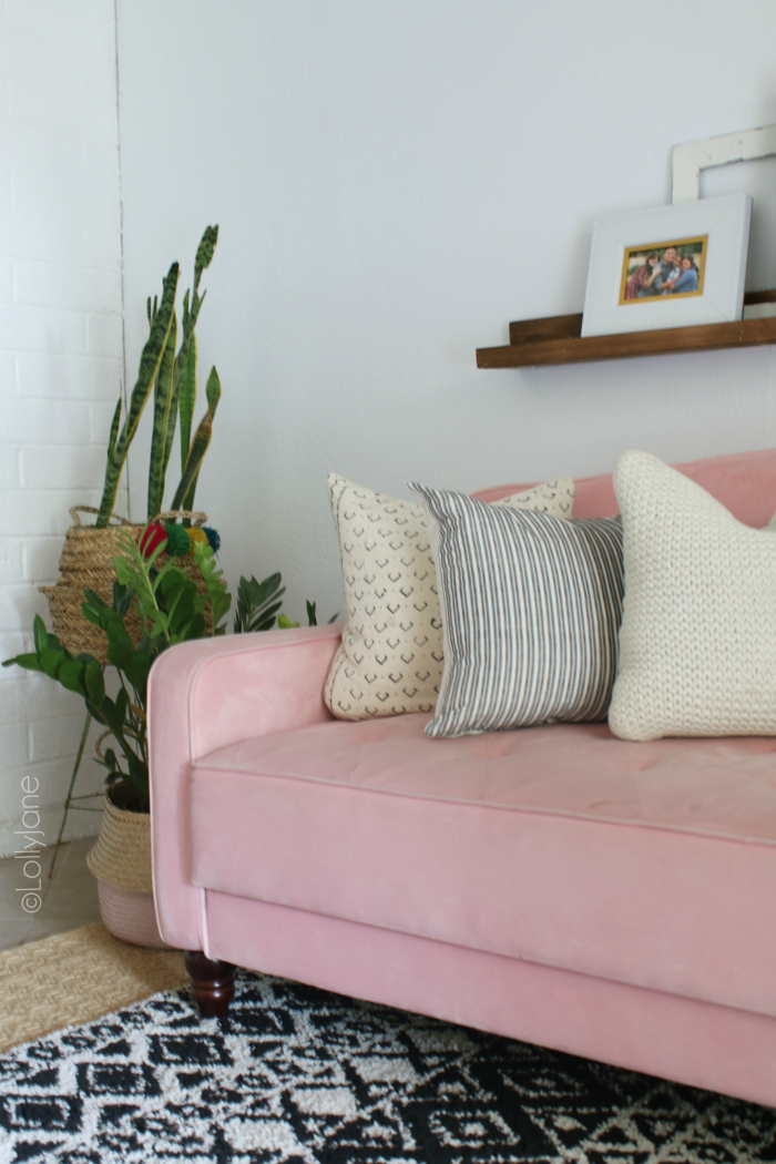 Decorating with snake plants to create boho decor. Love this pink velvet couch! #boho #snakeplant #plantlady #eclecticdecor