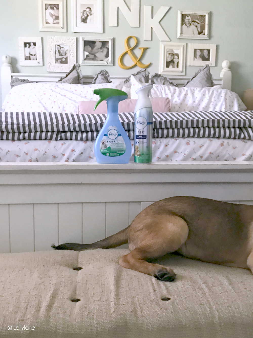 Say goodbye to unwanted pet smells! Love these SIMPLE Spring Cleaning Tips for pets! #pets #springcleaning #ad #dontsweatyourpet