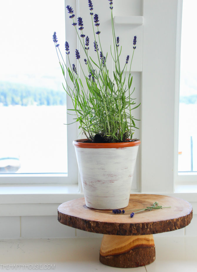 Love these DIY Lavender Pots, such cute home decor. Such a pretty french country decor accent or farmhouse decoration! #diy #lavender #tabledecor #farmhousecharm #frenchcountry #lavenderdecor