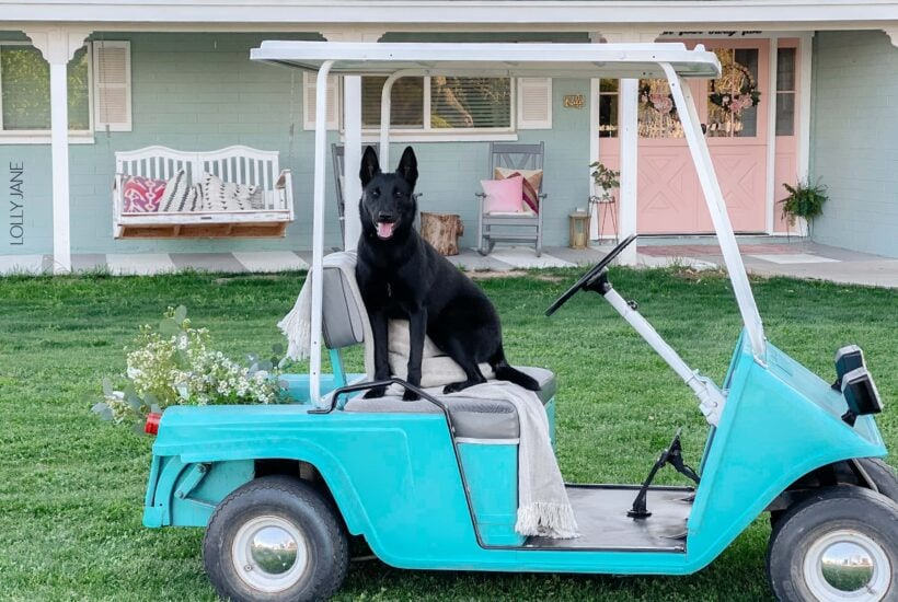 This golf cart makeover using COLORSHOT spray paint was so easy a dog can do it! (Kidding!) But it was really easy, read the full tutorial (and see the stunning before)! to get this look! #golfcart #golfcartmakeover #paint #paintingtips #painttips #spraypaint #spraypainting #spraypainttips